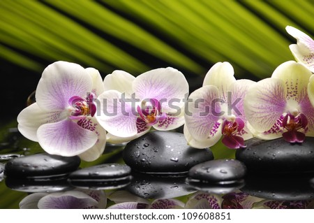 Set of orchid and black stones with palm leaf and reflection - stock photo