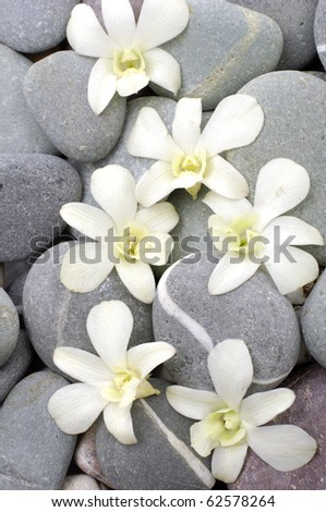 Set of orchid flower with zen stones background