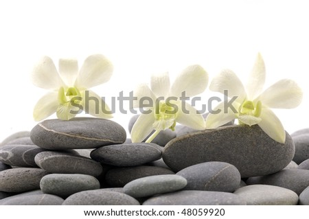 Set of orchid on pebbles