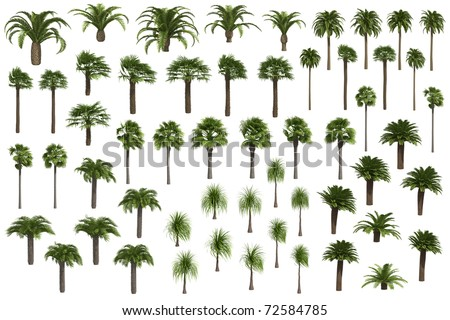 Set of palm trees isolated on white background - stock photo