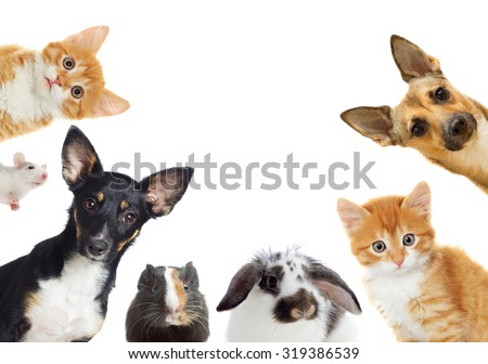 set of pet looking - stock photo