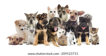 set of pets, cat and dog - stock photo