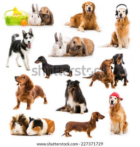 set of pets isolated on white background - stock photo