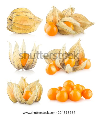 set of 6 physalis images - stock photo