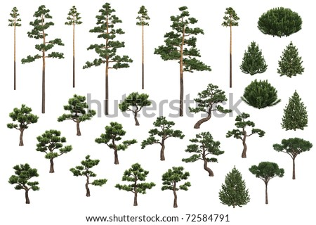 Set of pine trees isolated on white background - stock photo