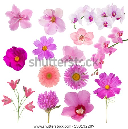 set of pink color flowers isolated on white background - stock photo