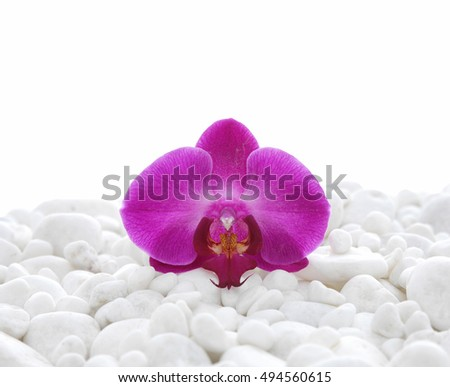 Set of pink orchid on pile of white stones