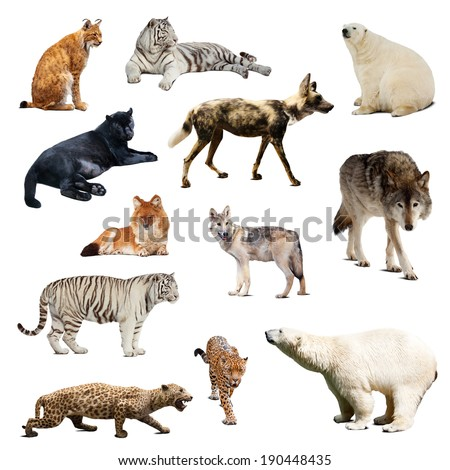 Set of predatory mammals. Isolated over white with shadows - stock photo