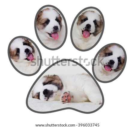 set of puppies, paw