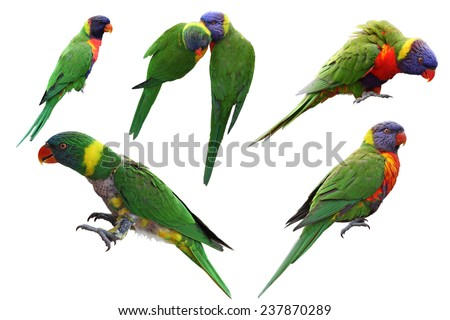 Set of rainbow lorikeet birds isolated on white background - stock photo