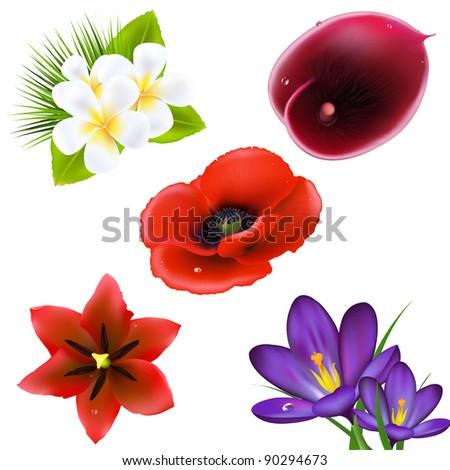 Set Of Realistic Flowers, Isolated On White Background - stock photo