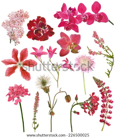 set of red color flowers isolated on white background - stock photo