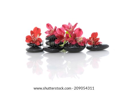 Set of red orchid on stacked black stones reflection