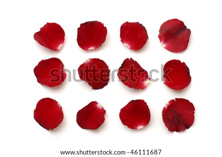 Set of red petals on white