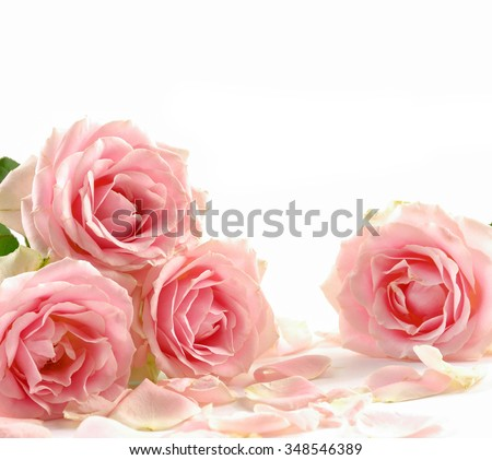 Set of rose with pile of petals