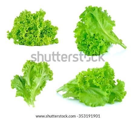 Set of Salad leaf. Lettuce isolated on white background. - stock photo