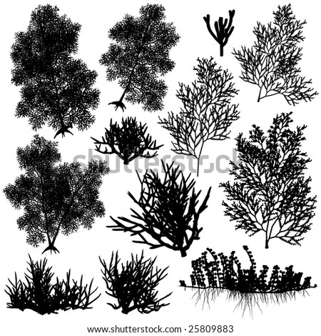 Set of sea coral silhouettes. Vector file available.