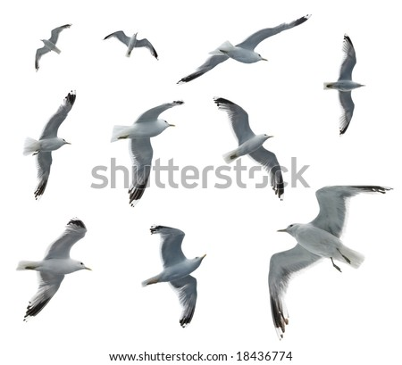 Set of sea gulls isolated on white - stock photo