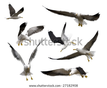 Set of sea gulls isolated on white. Poses of birds express various emotions. - stock photo