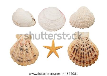 Set of sea shells - stock photo
