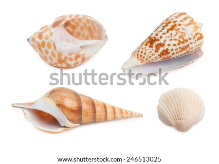 Set of sea shells isolated on white - stock photo