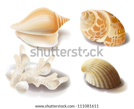 set of seashells and coral - stock photo