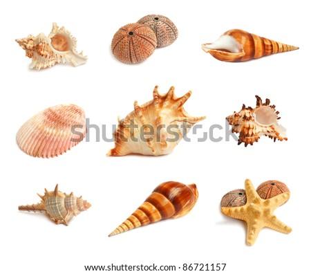 Set of seashells, starfish and echinus on a white background - stock photo