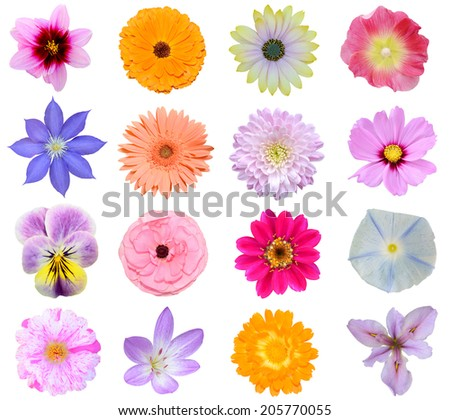 Set of seasonal flowers blooming, isolated white