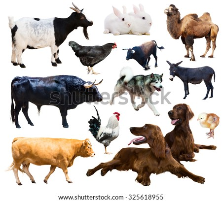 Set of setters and other farm animals. Isolated over white background   - stock photo