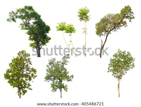 set of seven green trees isolated on white background - stock photo