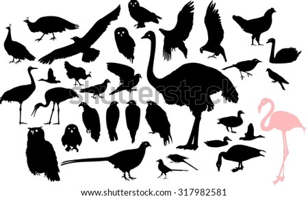 Set of silhouettes of different birds - stock photo