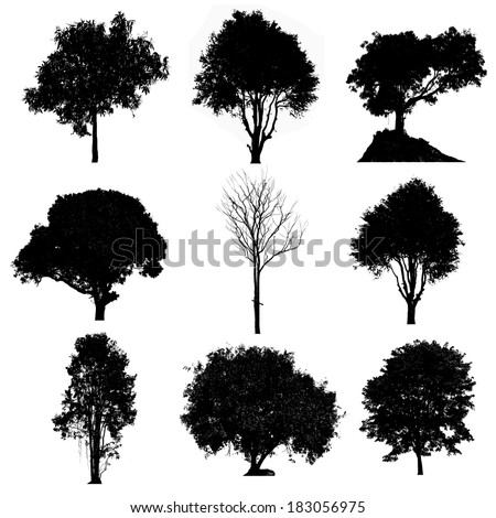 Set of silhouettes of trees - stock photo