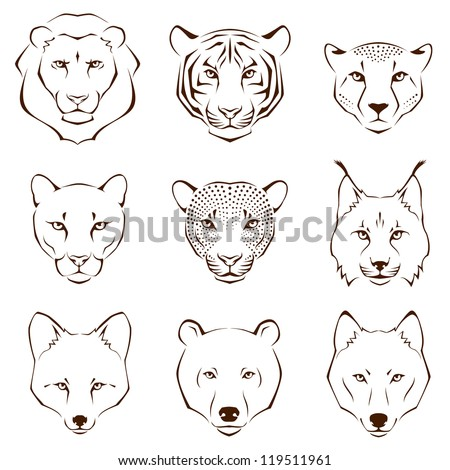 Wild Animal Sketches Wild Animals Lion Tiger