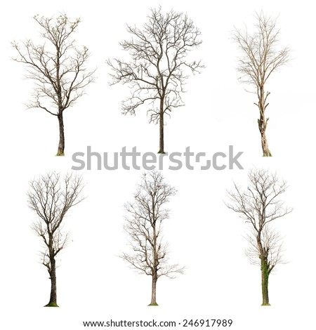 set of six Dead tree isolated on white background - stock photo
