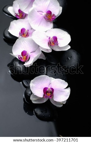 Set of six white orchid with therapy stones