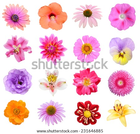 Set of sixteen flower heads isolated on white background