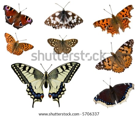 Set of some European butterflies isolated on white - stock photo