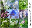 Set of spring blooming flowers: cherry, lilac, violet, pear, chestnut. Shallow depth of field - stock photo