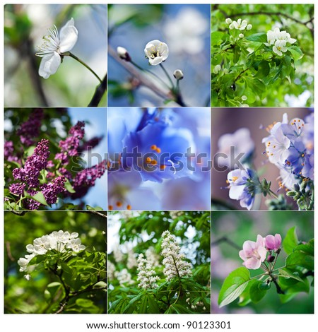 Set of spring blooming flowers: cherry, lilac, violet, pear, chestnut. Shallow depth of field