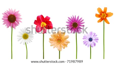 Set of spring blooms in planting America - stock photo