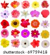 Set of spring flowers - stock photo