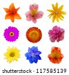 Set of spring flowers on white - stock photo