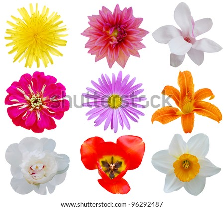 Set of spring flowers over white - stock photo