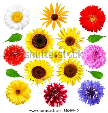 Set of summer flowers isolated on white background - stock photo