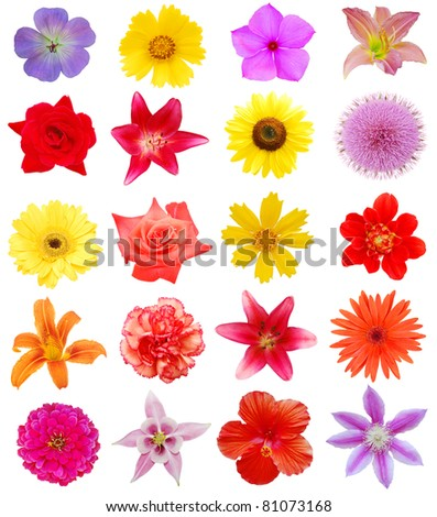 set of summertime flowers
