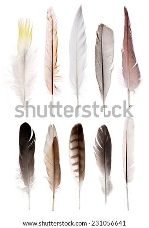 set of ten feathers isolated on white background - stock photo