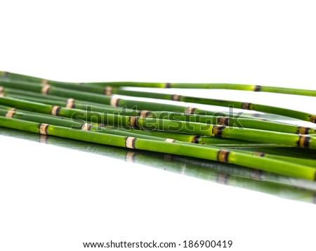 Set of thin bamboo grove - stock photo