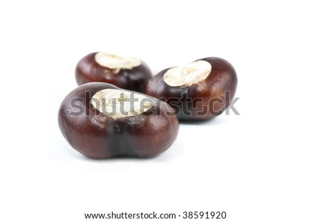 set of three conkers on white background