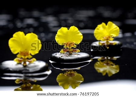 Set of three yellow orchid and black stone with reflection - stock photo