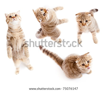 set of top view tabby kitten isolated - stock photo